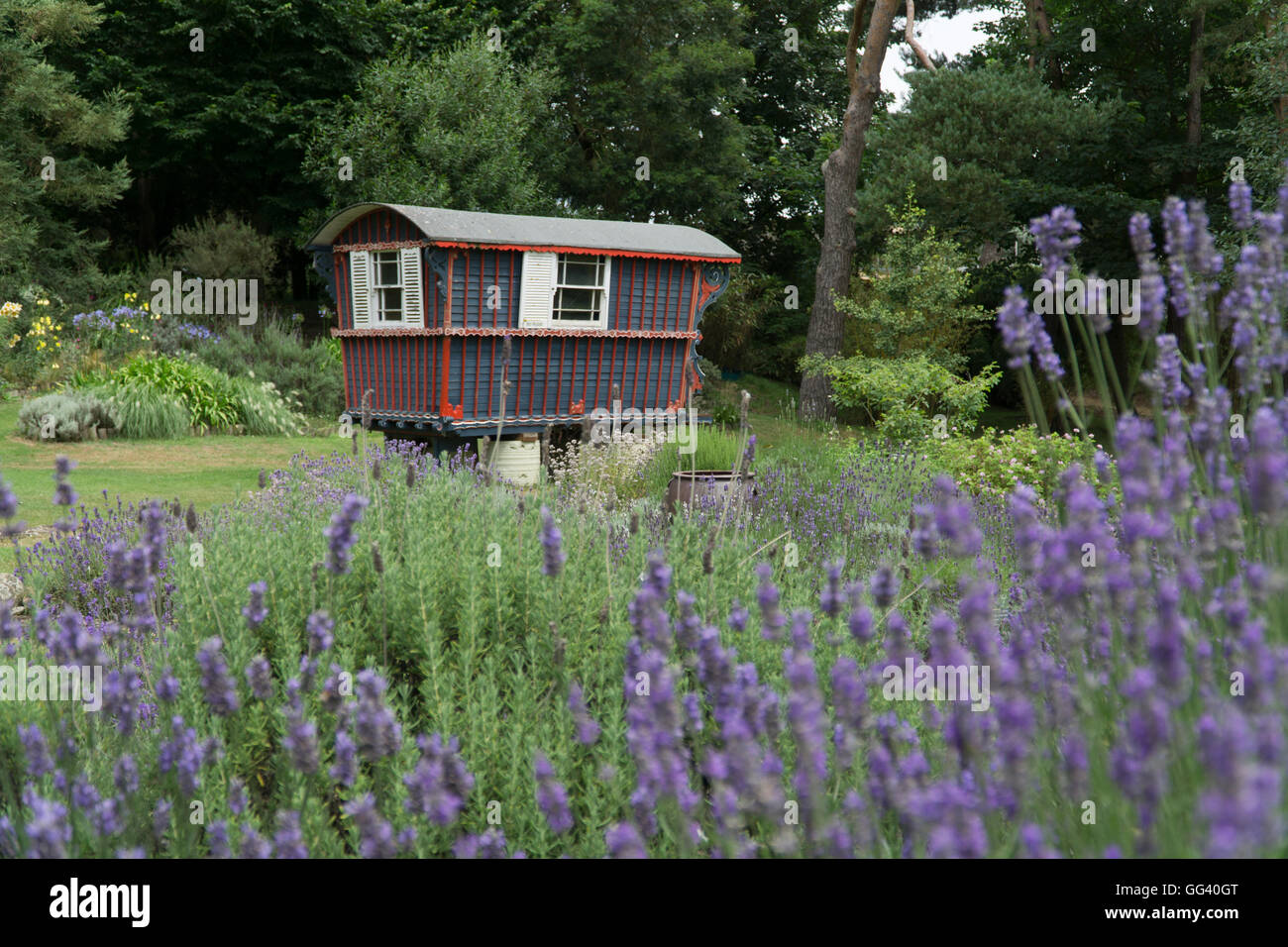 Landscape view of old Gypsy Caravan at Jersey Lavender Farm,Channel Islands Stock Photo