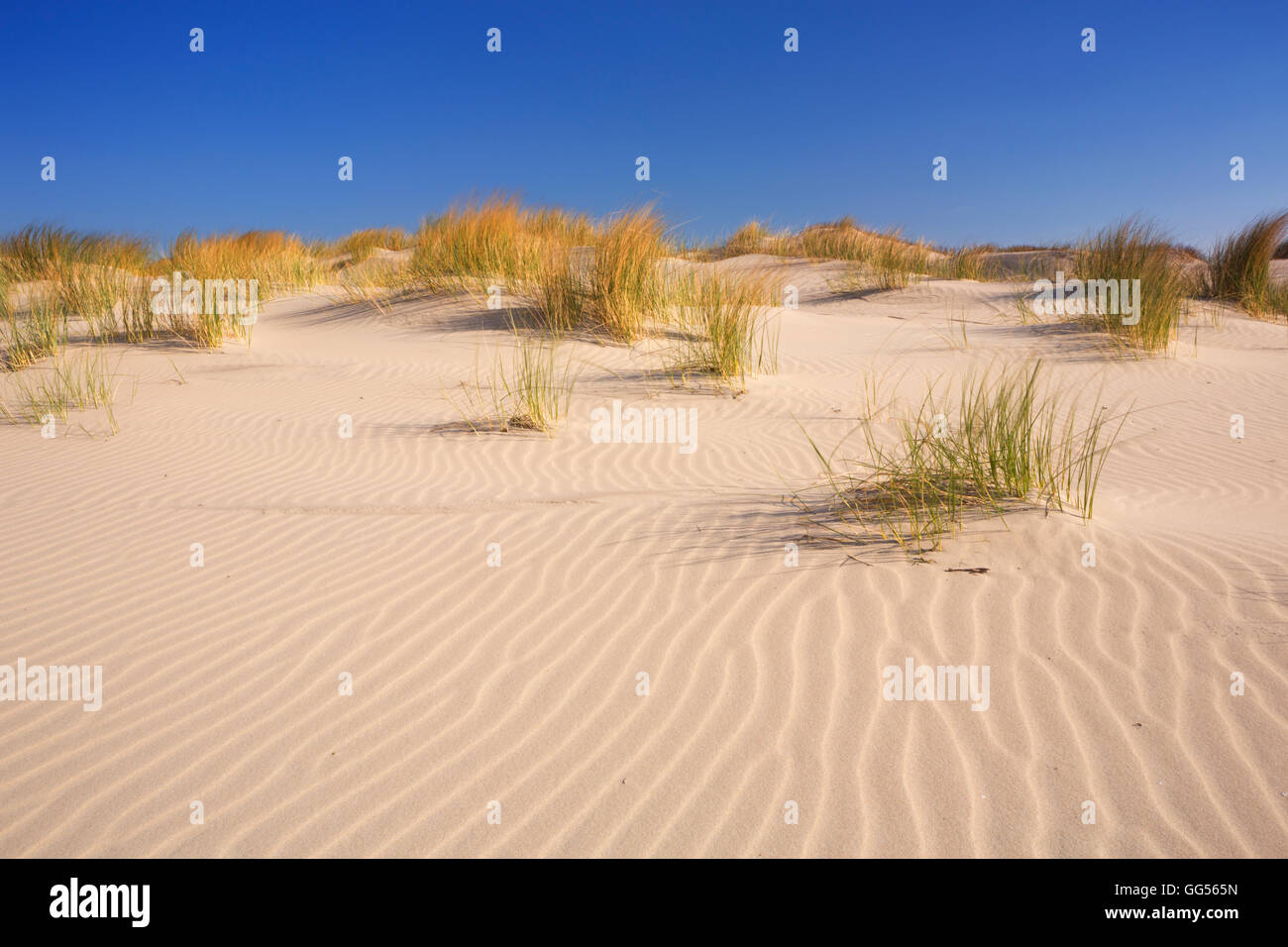 Sand dunes with ripples on the Dutch island of Terschelling on a bright and sunny day. - Stock Image