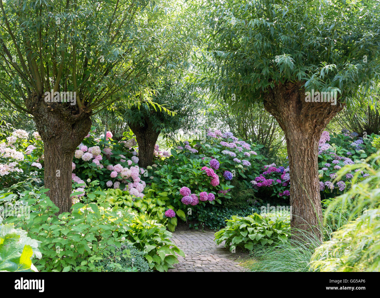 Violet willow stock photos violet willow stock images alamy garden with green willow trees and pink and purple hydrange hortensia flowers in july stock mightylinksfo