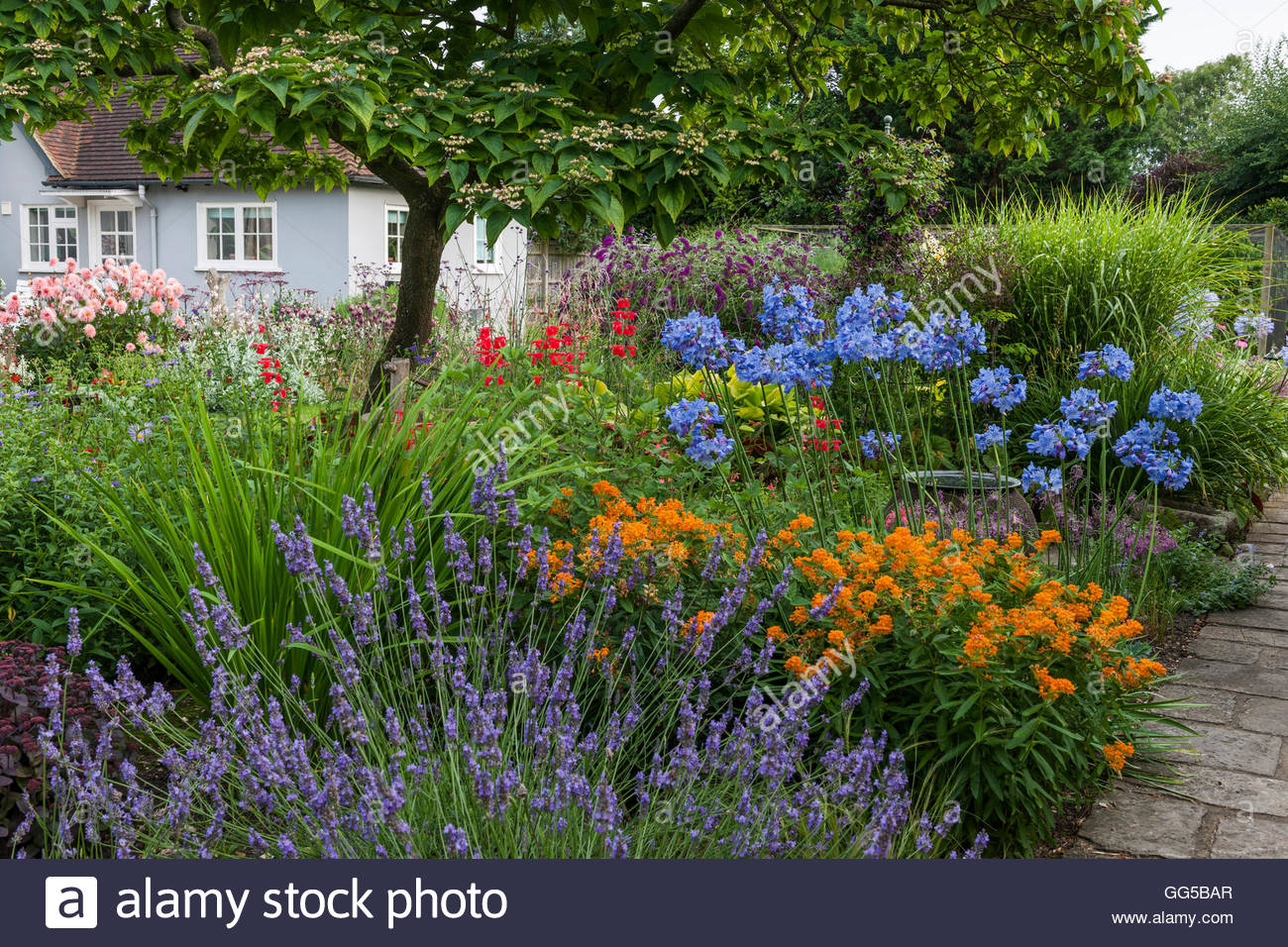 mixed garden borders - Stock Image