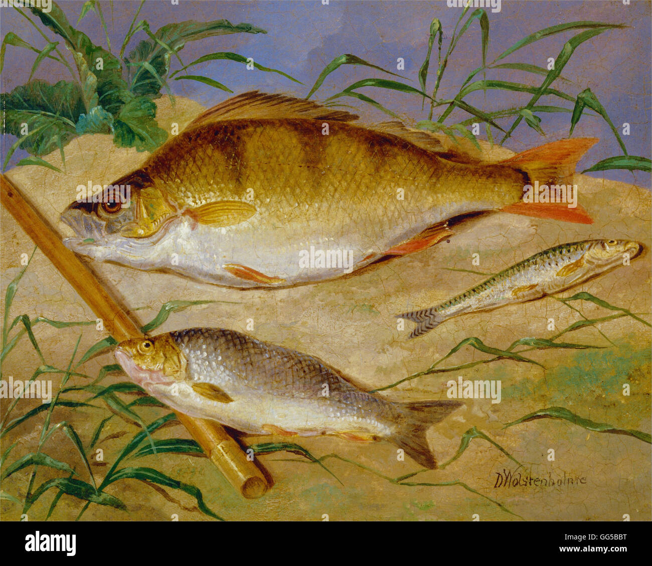 Dean Wolstenholme - An Angler's Catch of Coarse Fish - Stock Image