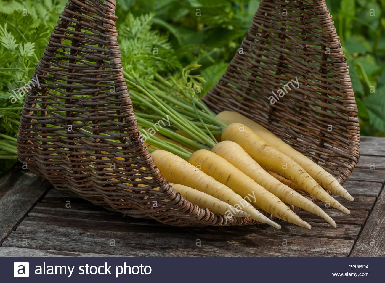 Carrot 'Creme de Lite' - Stock Image