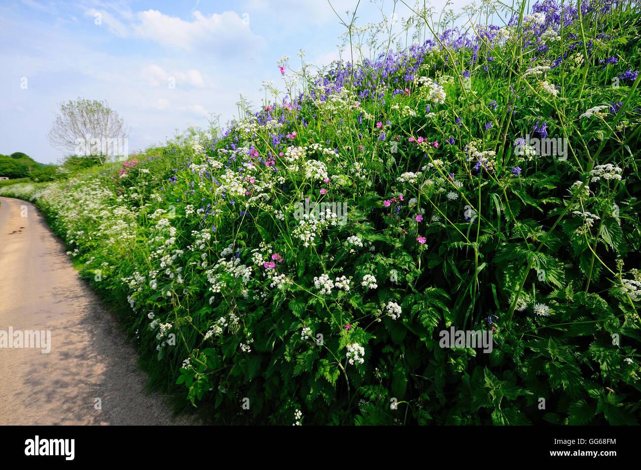 Spring wild flowers on roadside bank uk stock photo 113235128 alamy spring wild flowers on roadside bank uk mightylinksfo