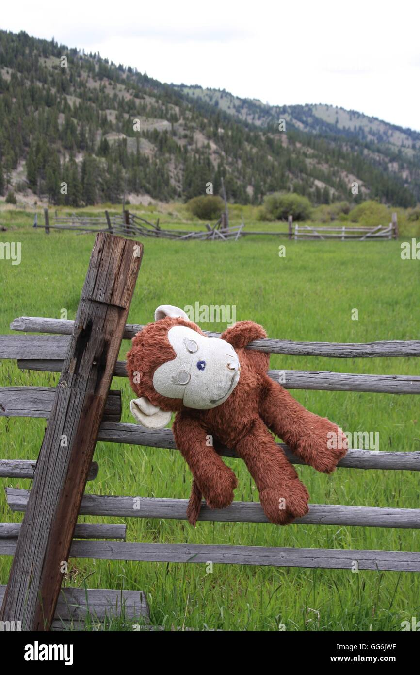 Monkey on a fence - Stock Image