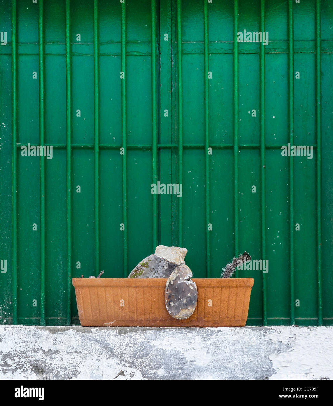 Dead an dried Cactus plant in window box against steel shuttered windows. - Stock Image