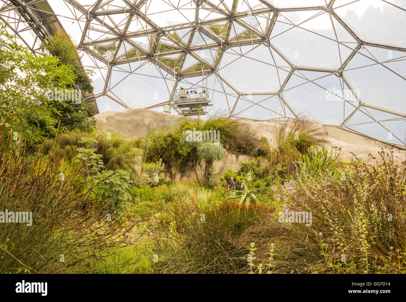 The Mediterranean biome of the Eden project in cornwall england - Stock Image