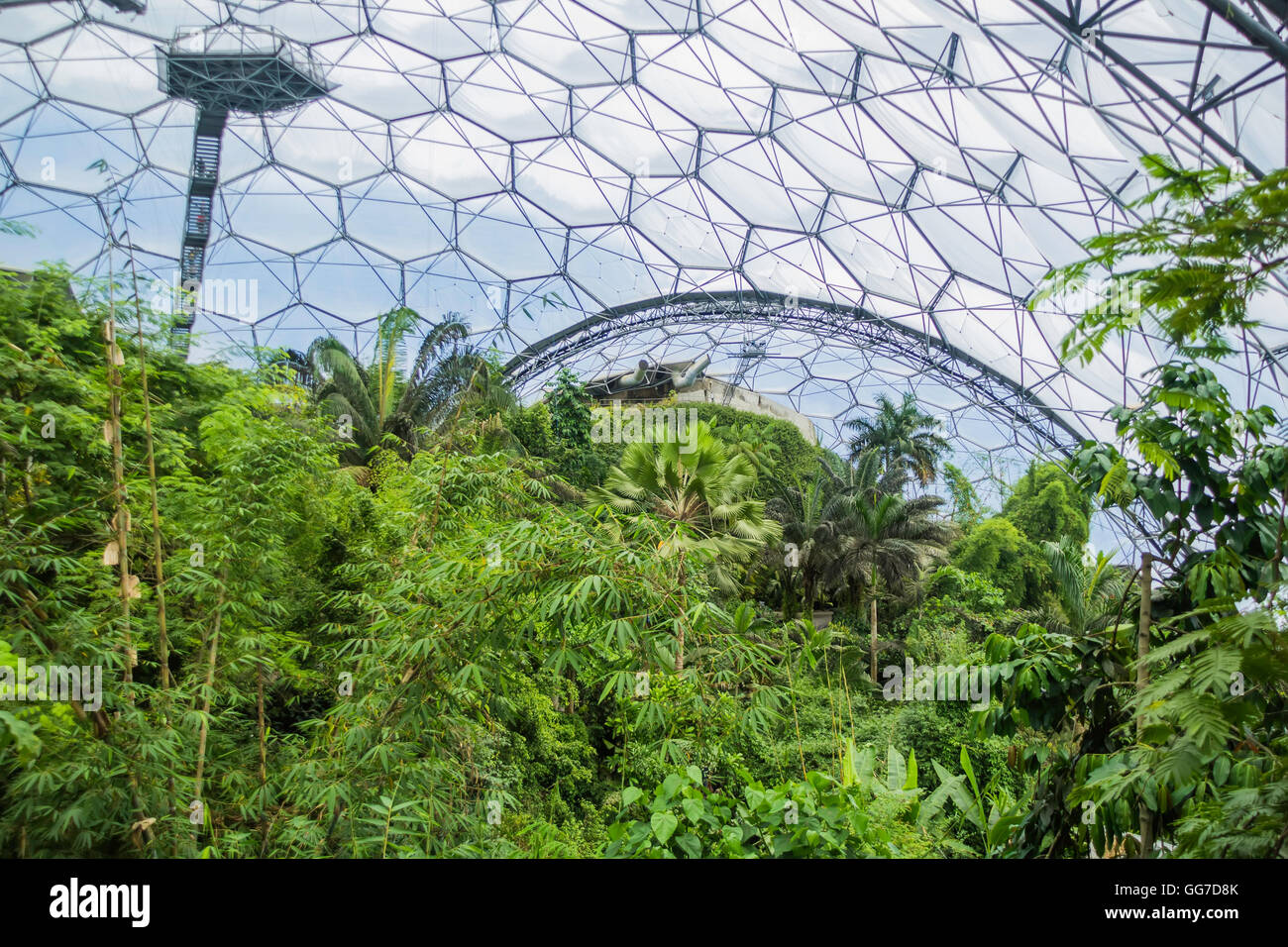 The rainforest biome of the Eden project in cornwall england - Stock Image