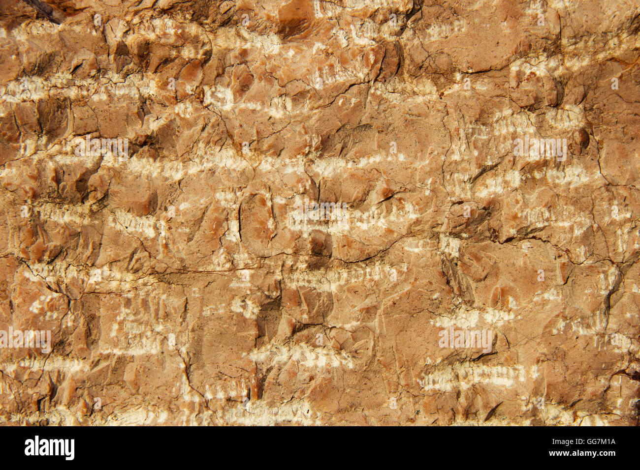 Stone surface as a background Stock Photo