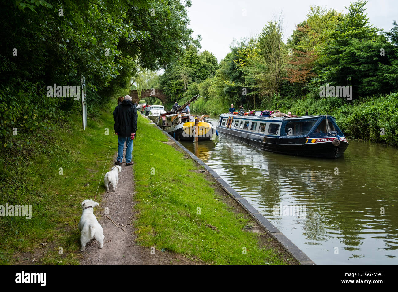 Couple walking dogs on towpath of Kennet and Avon Canal in Wiltshire England, United Kingdom - Stock Image