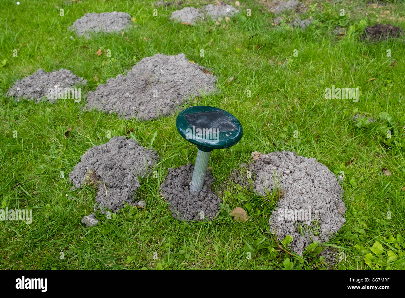 Electronic solar powered noise and vibration device to deter burrowing moles in a garden lawn - Stock Image