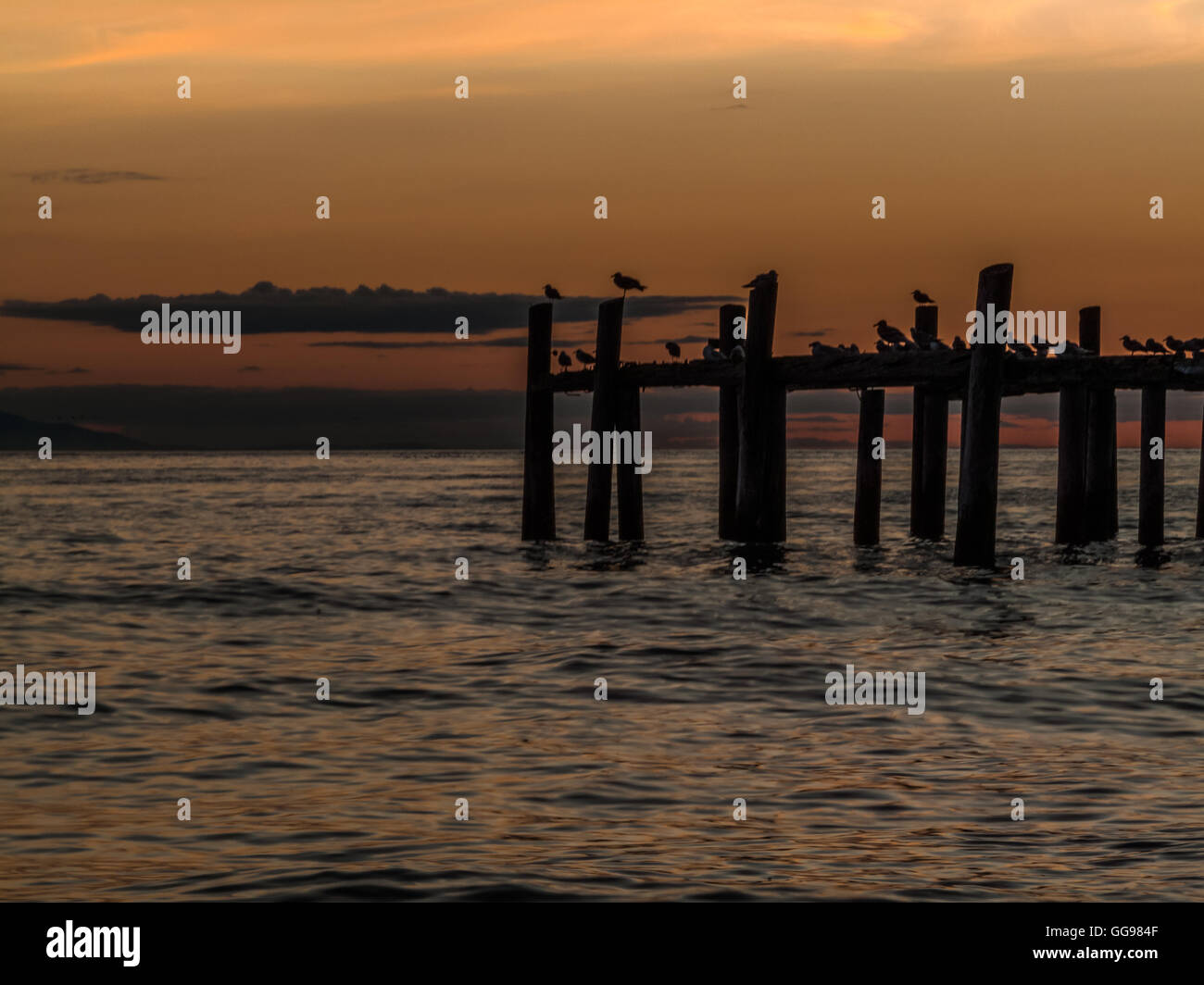 seagulls silhouette resting on posts at sun dawn in Point Roberts, Washington State, USA - Stock Image
