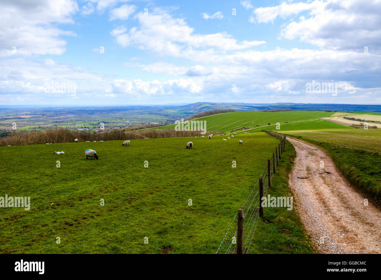 South Downs, Petworth, Chichester, West Sussex, England, UK - Stock Image