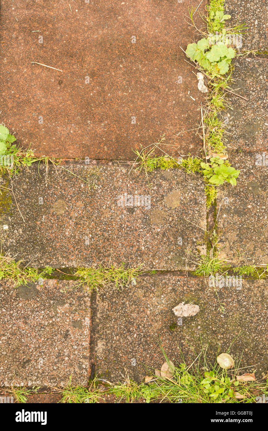 weeds and self set seedlings in between patio paving slabs - Scotland, UK - Stock Image