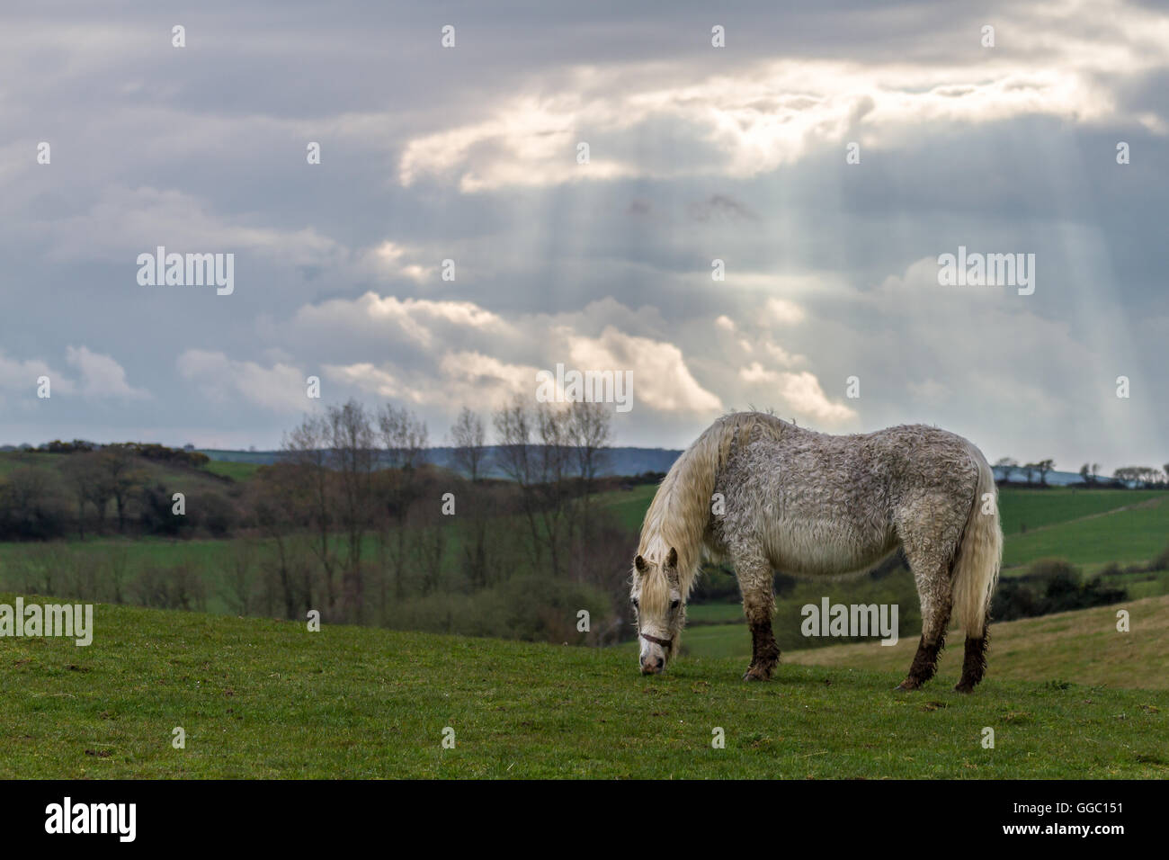 suns rays through clouds on wet horse and farm land - Stock Image