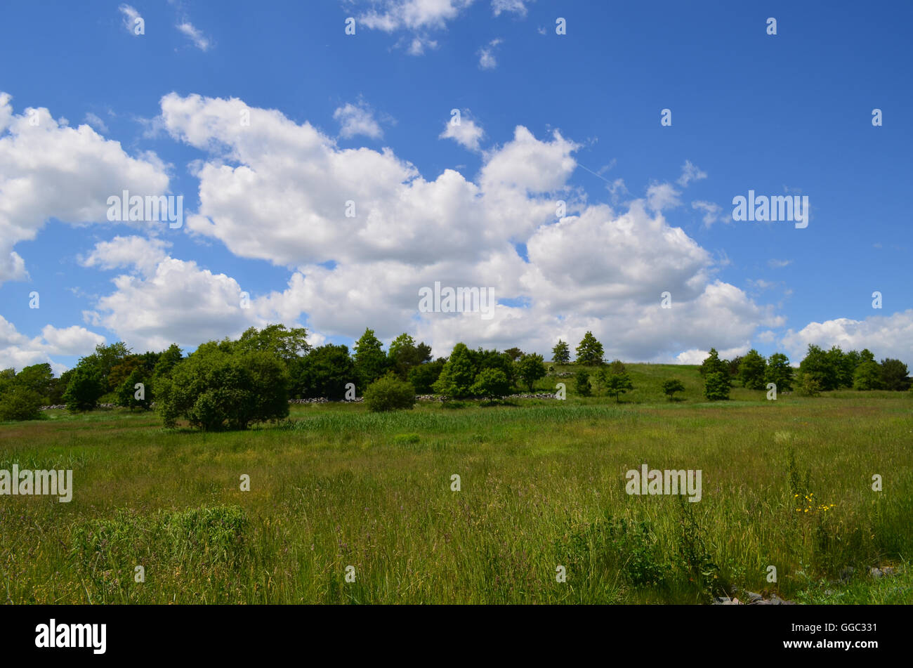 Gorgeous lush views of woods and trees on Spectacle Island in Massachusetts. - Stock Image