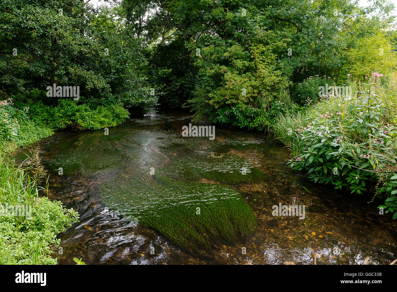 Summer time photos of the restoration project at a chalk stream site after ten years of quarrying. Panshanger Park, - Stock Image