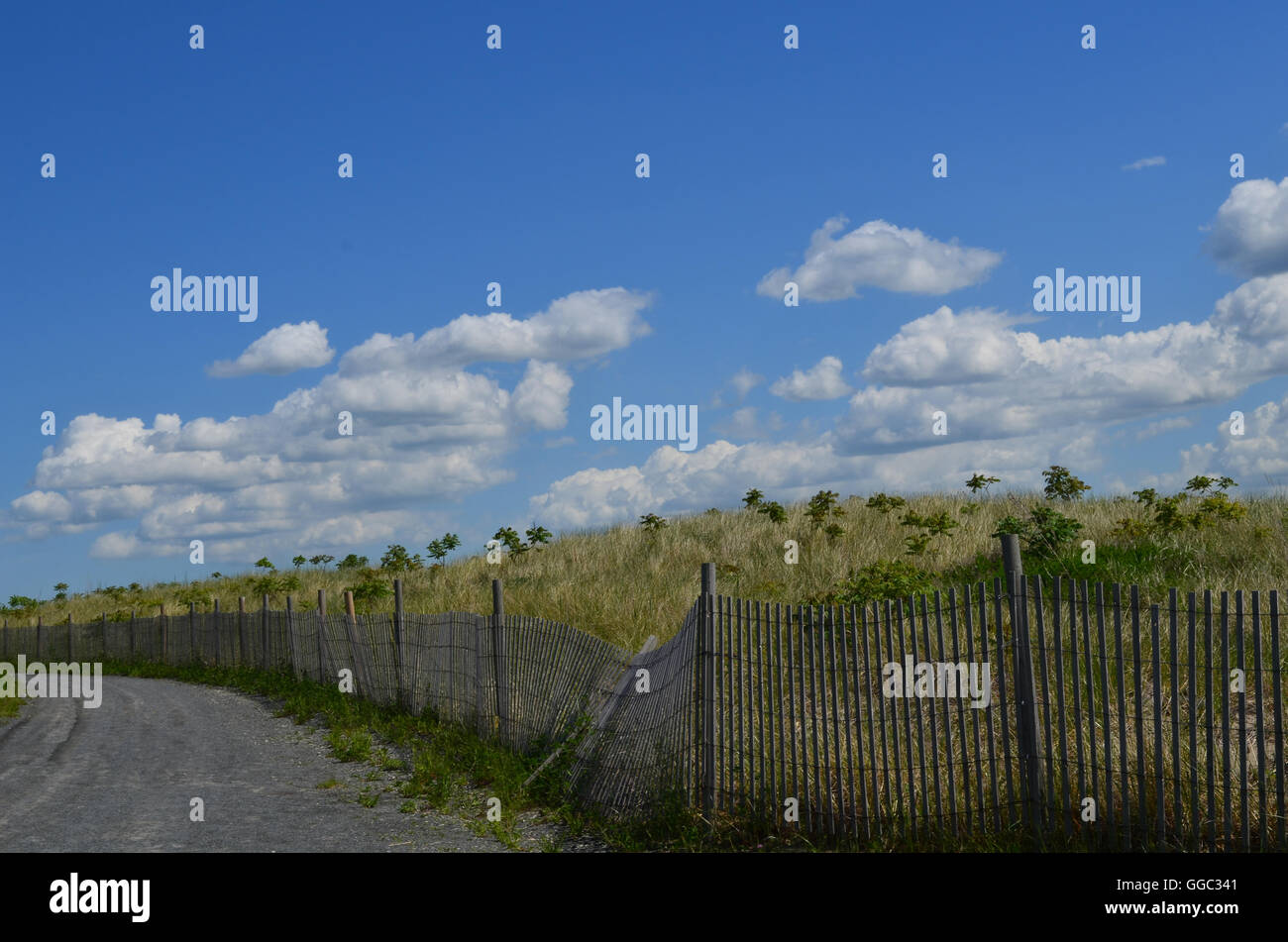 Hiking road with beach fencing there is also long beach grass on Spectacle Island. - Stock Image