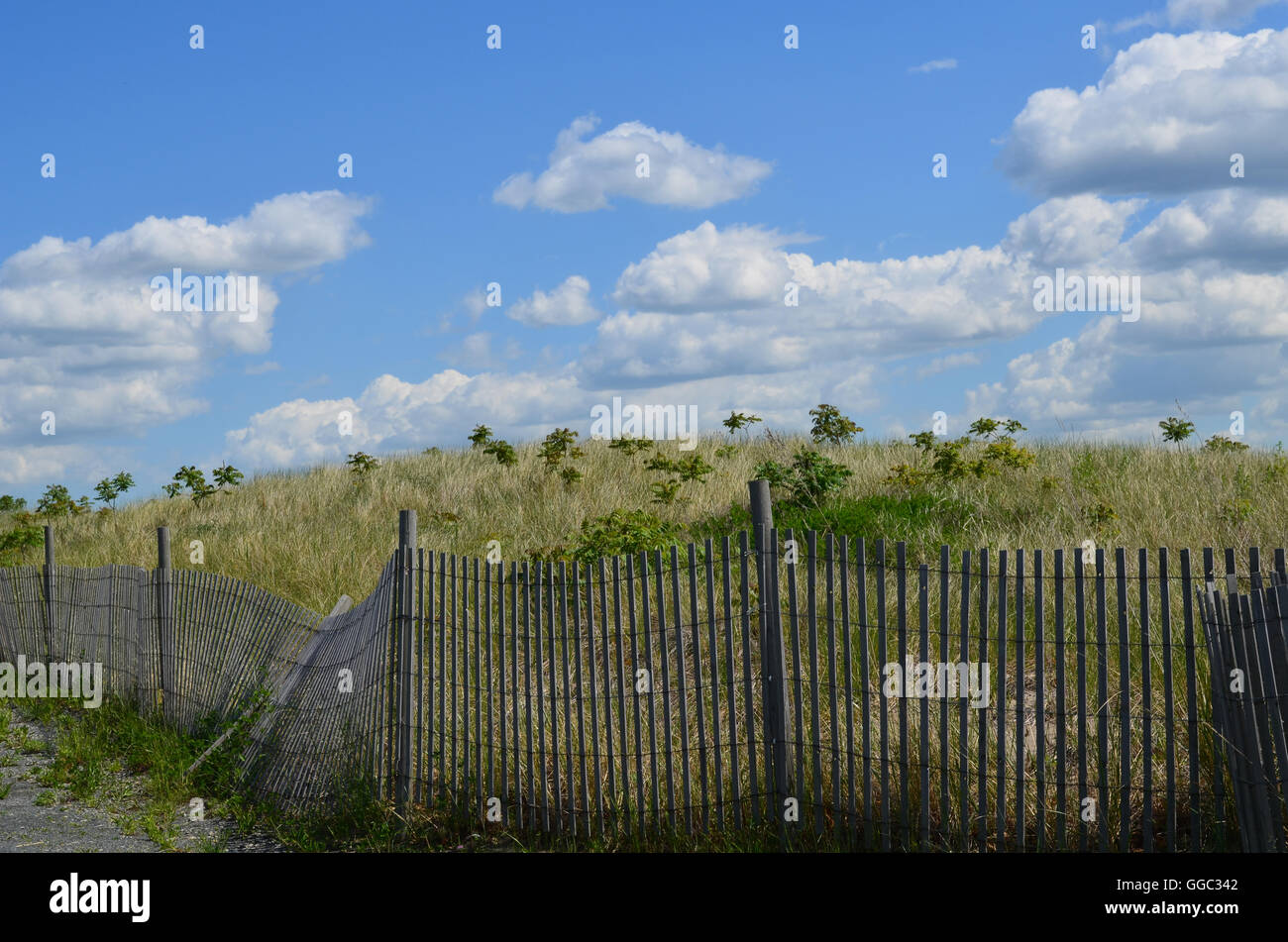 Perfect day on Boston Harbor's Spectacle Island with tall grass and a beach fence. - Stock Image