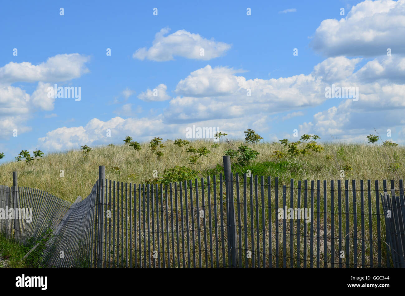 Wooden fencing around dunes and tall grass on Spectacle Island. - Stock Image