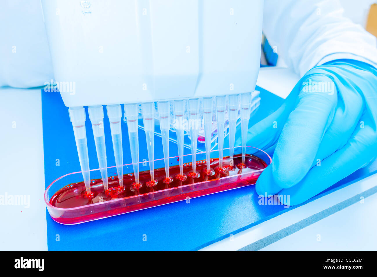 96 well plate for PCR processing, microbiological laboratory - Stock Image