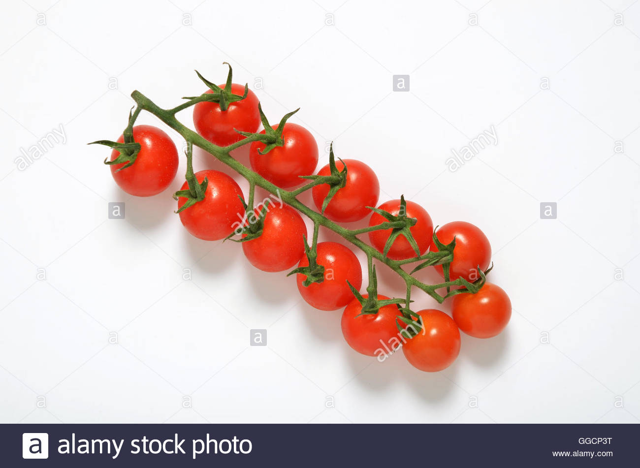 Piccolo cherry tomatoes on vine shot overhead on white background - Stock Image