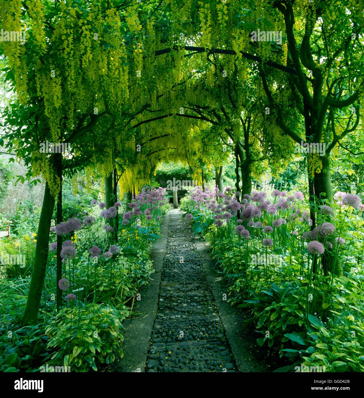 Archway - of Laburnum x watereri `Vossii' at Barnsley House. - - (Please credit: Photos Hort/designer Rosemary - Stock Image