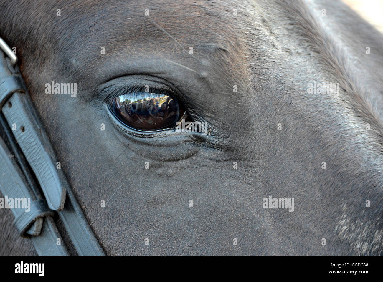 Close in on a horse's eye. - Stock Image