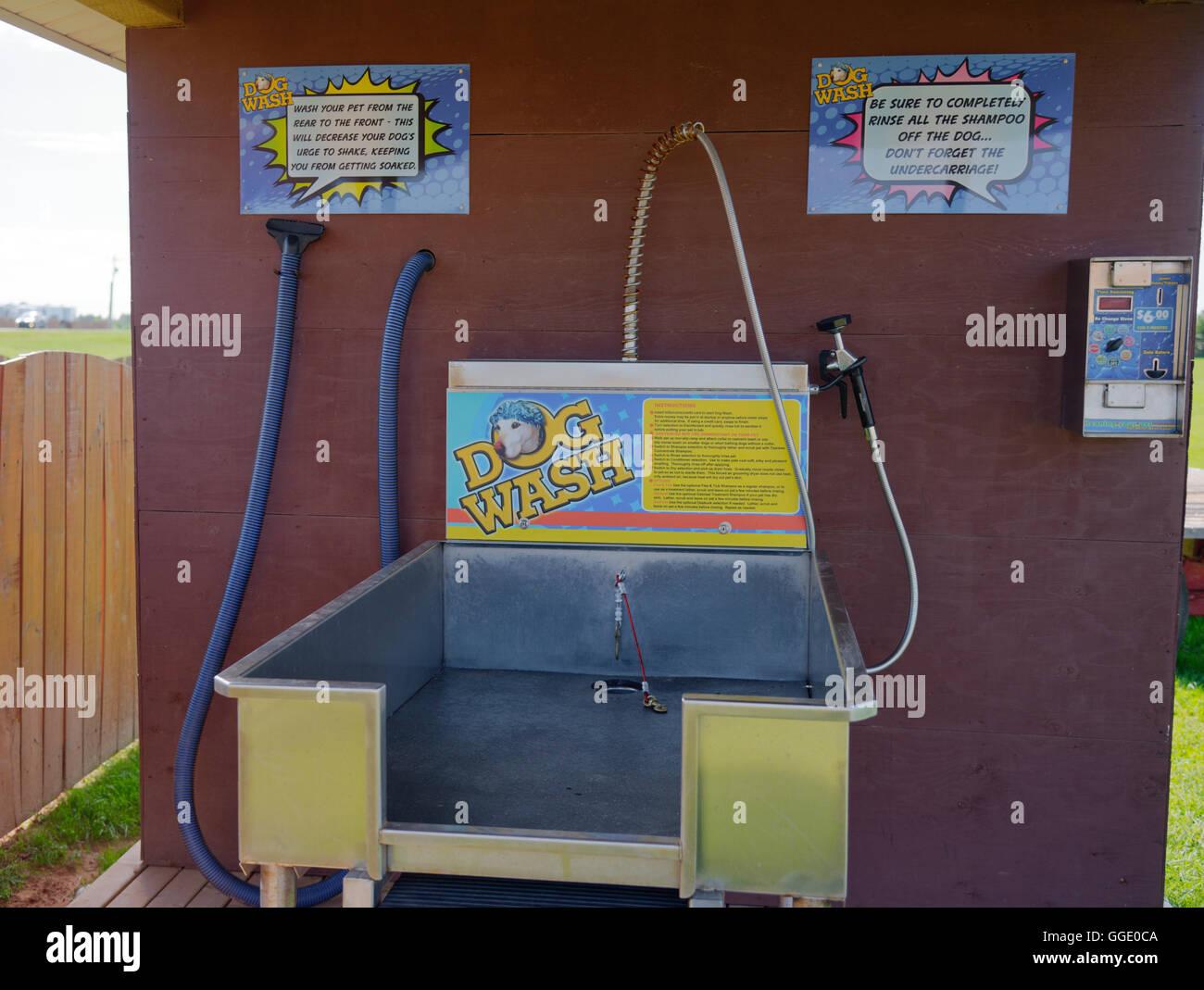 Dog wash station - Stock Image