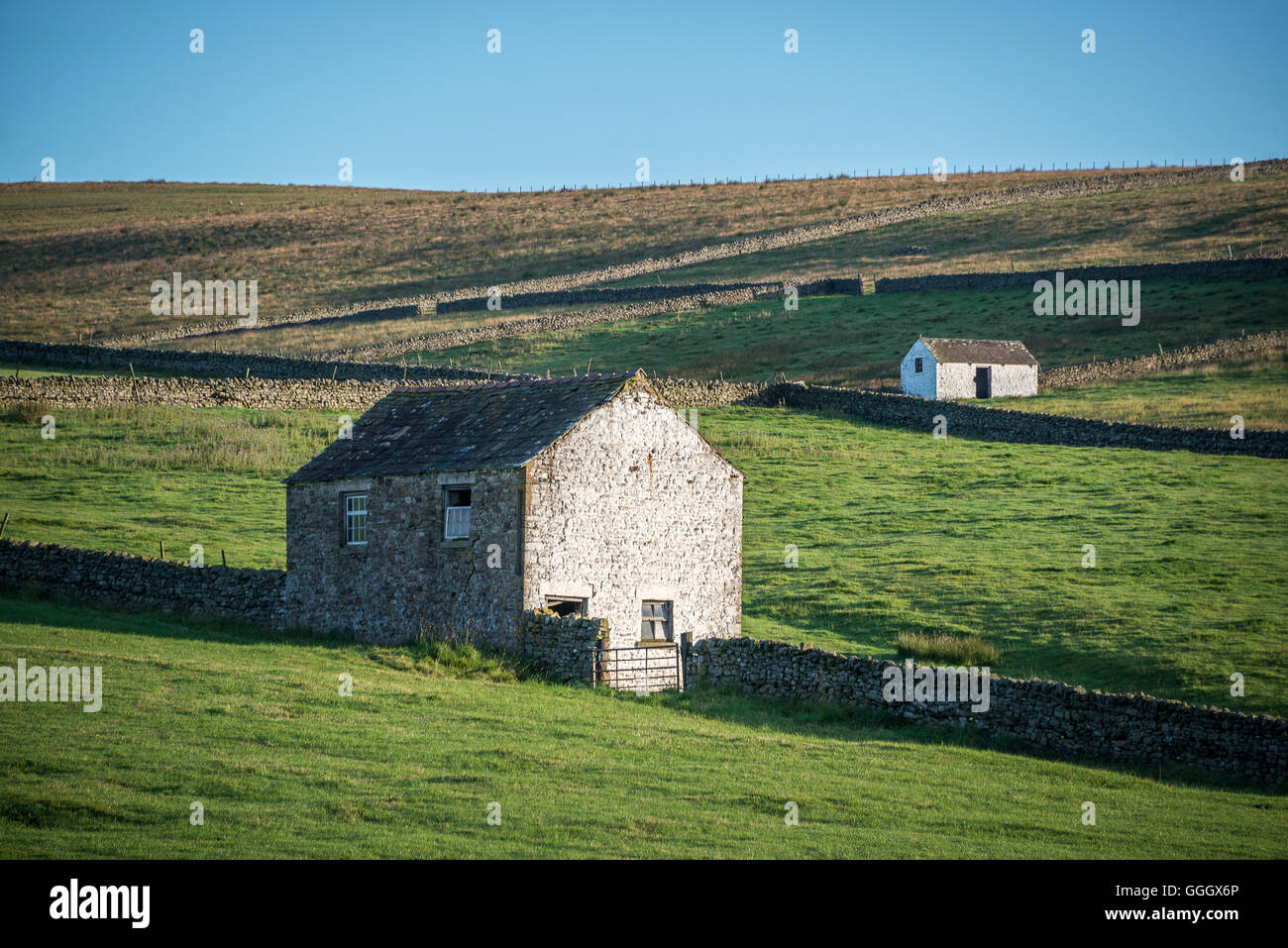 Teesdale, near Forest-in-Teesdale - Stock Image