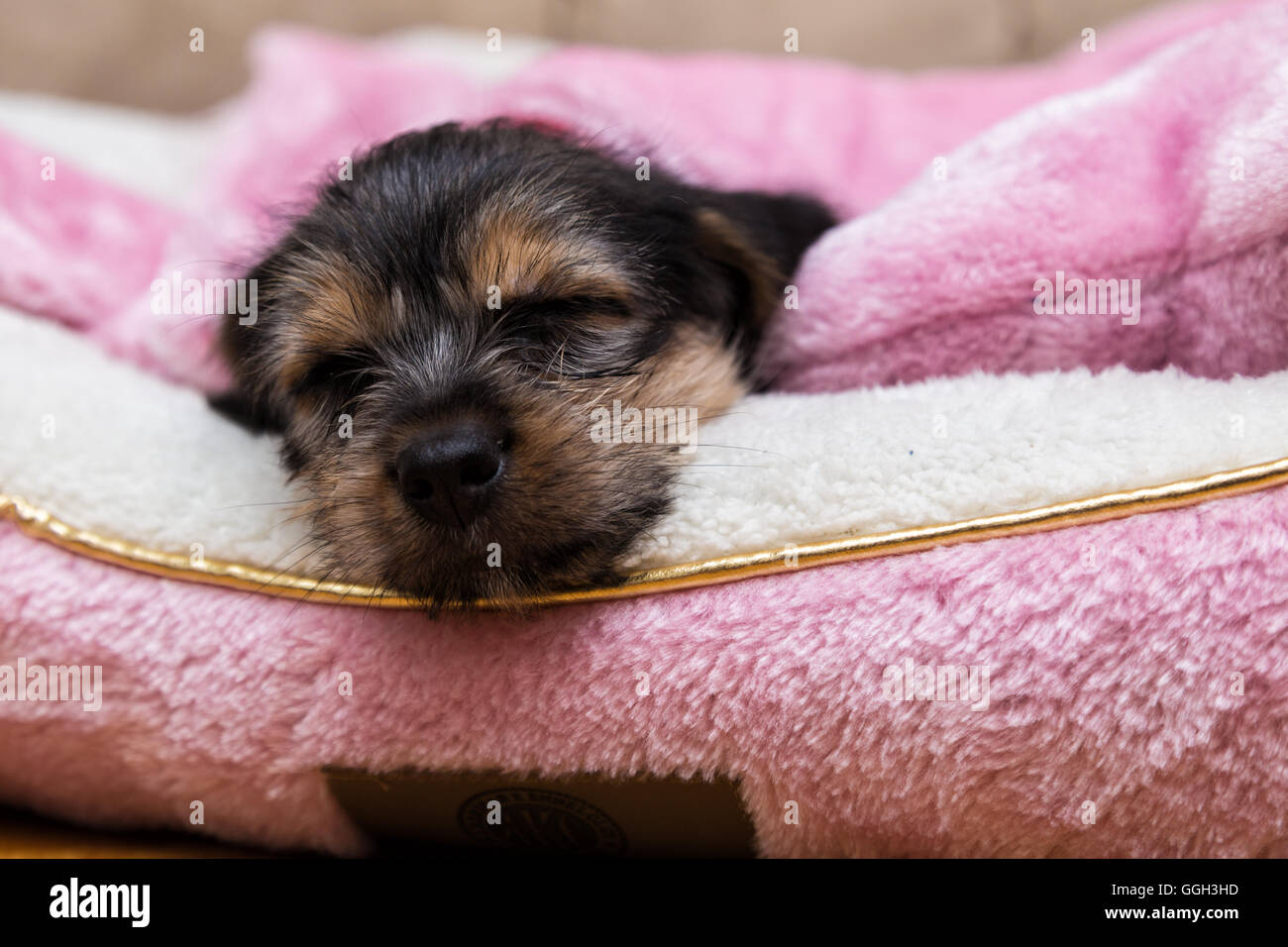 Sweet Dreams - Stock Image