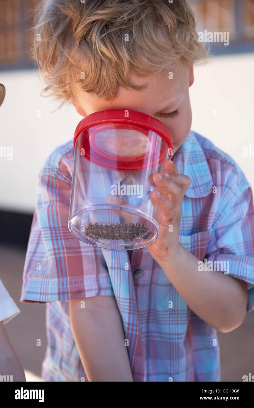 Boy watching an insect with a beaker magnifying glass, Spitzkoppe Mountains, Damaraland, Namibia - Stock Image