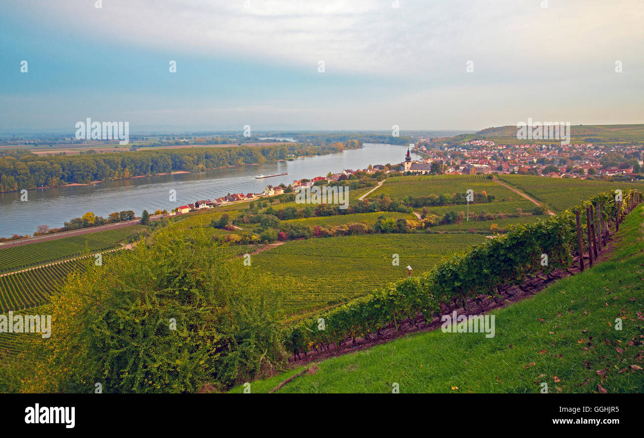 View across vineyards, St. Kilian's church and the river Rhine at Nierstein, Oberrhein, Upper Rhine, Rhineland Stock Photo