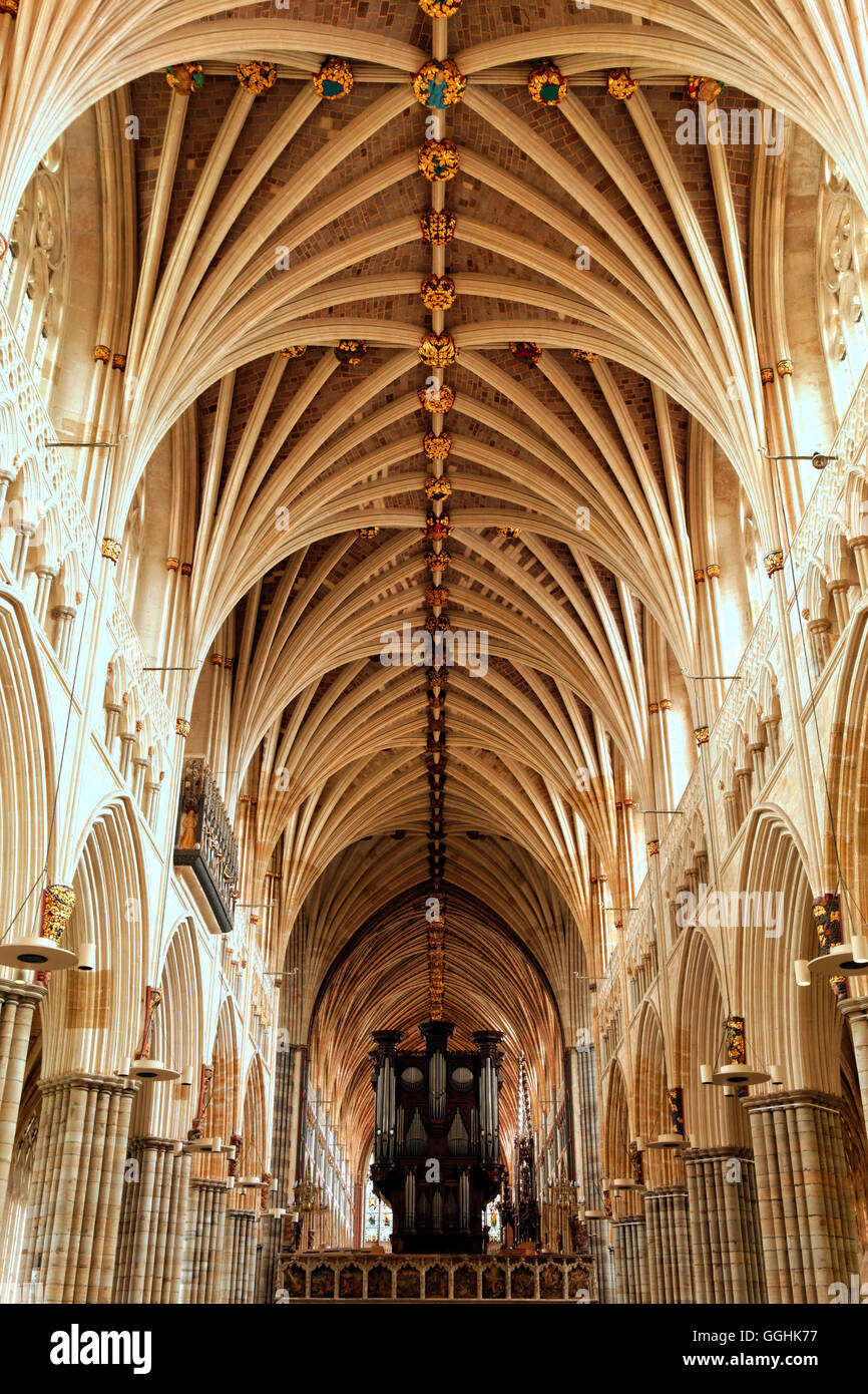 Vault ceiling of the cathedral, Exeter, Devon, England, Great Britain - Stock Image