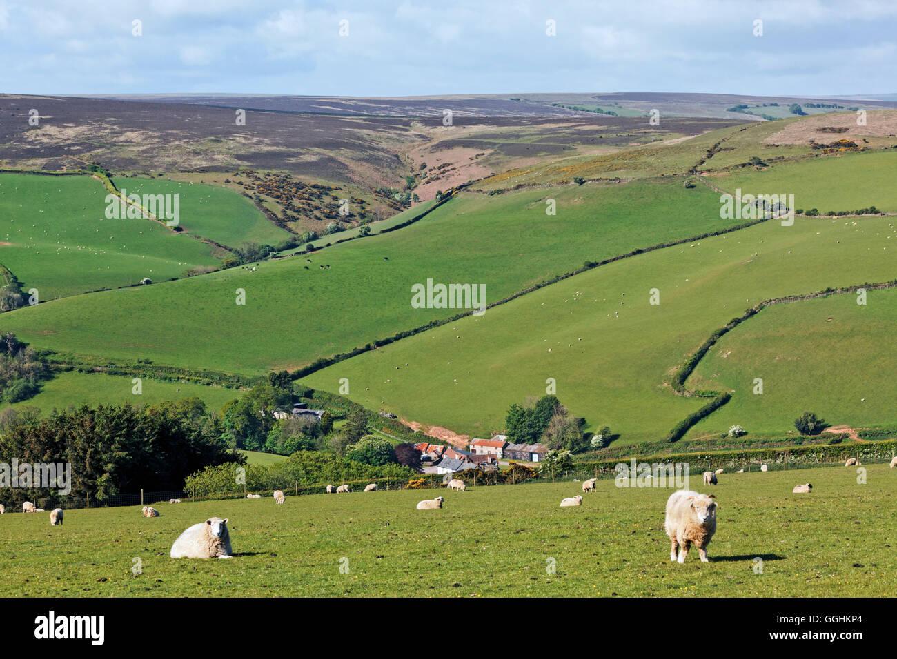 Exmoor landscape west of Porlock, Somerset, England, Great Britain - Stock Image