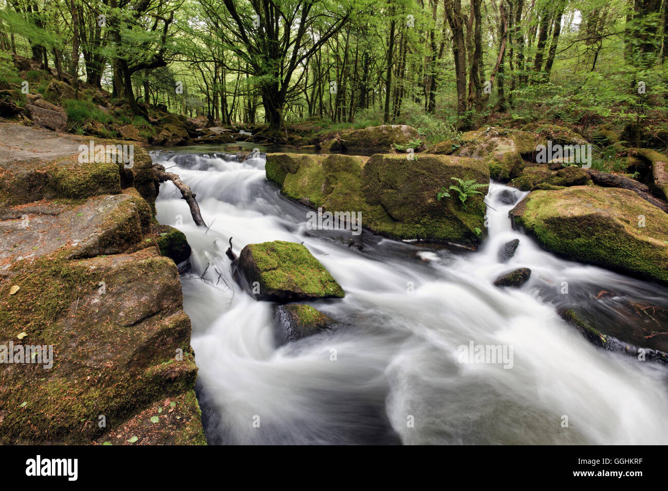 River Fowey at Golitha Falls National Nature Reserve, sessile oak woodland, Bodmin Moor, Cornwall, England, Great - Stock Image