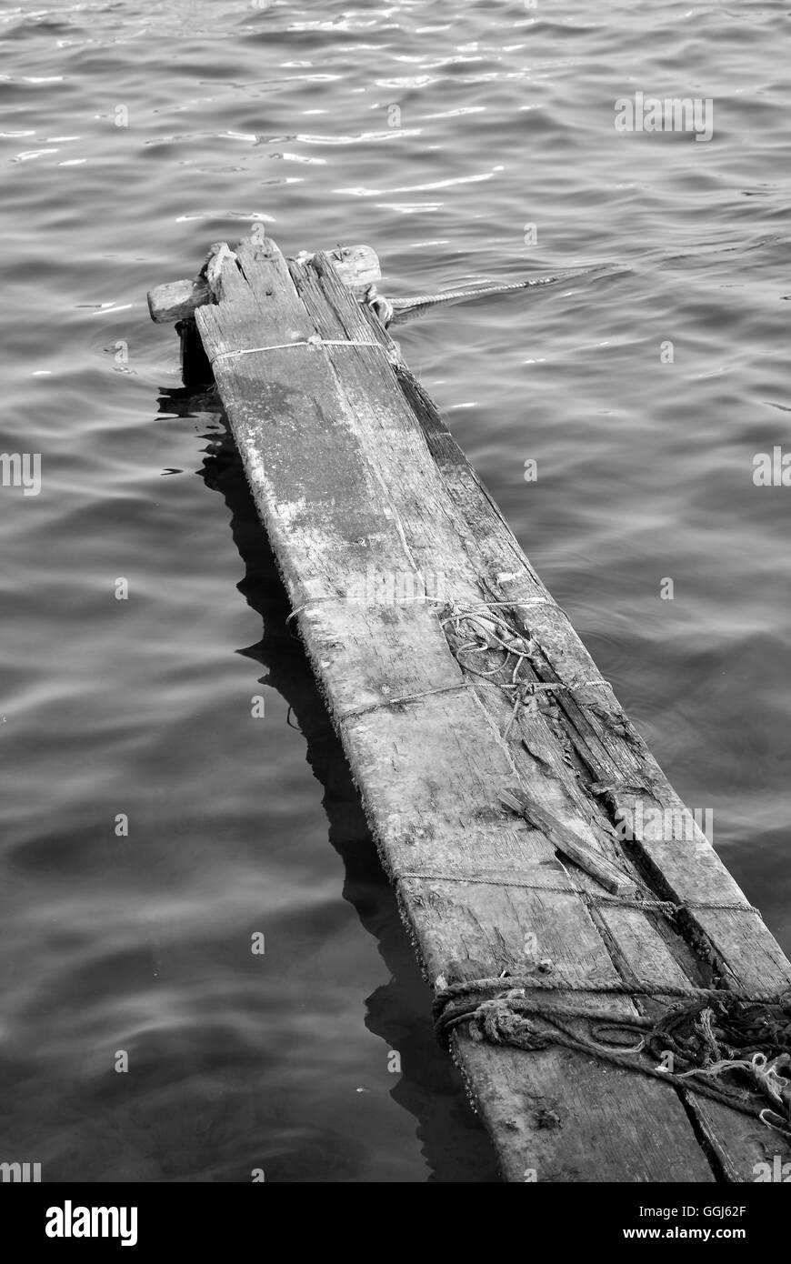 floating log ocean sea marine life wood wooden afloat shore water - Stock Image