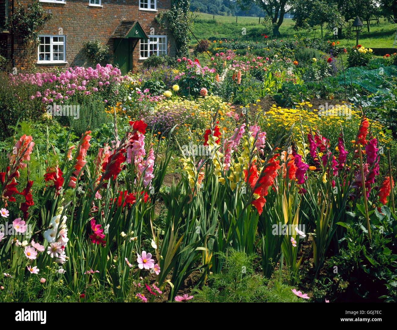 Cottage Garden With Gladiolus In Foreground Greetings Card