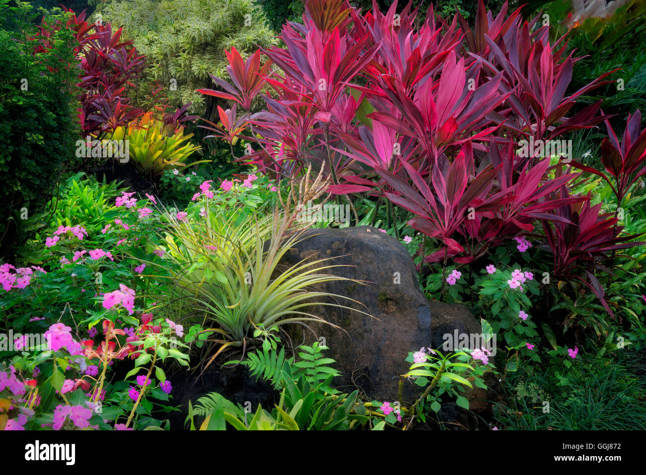 Red Ti plant (Cordyline Fruticosa) and pink impatiens flowers with Bromelliad at Na Aina Kai Botanical Gardens, - Stock Image