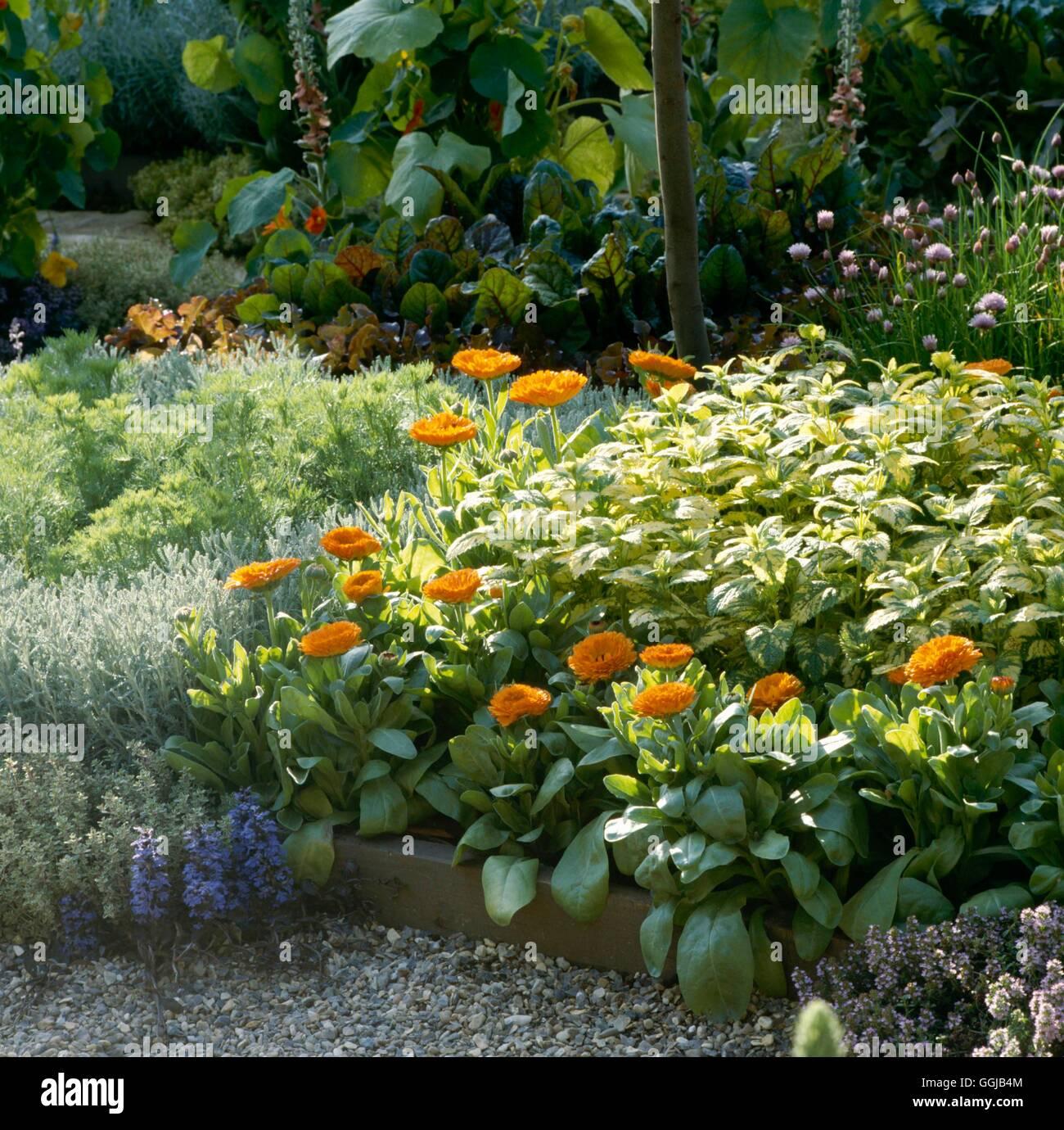 Planting Marigolds In Herb Garden Garden Ftempo Math Wallpaper Golden Find Free HD for Desktop [pastnedes.tk]