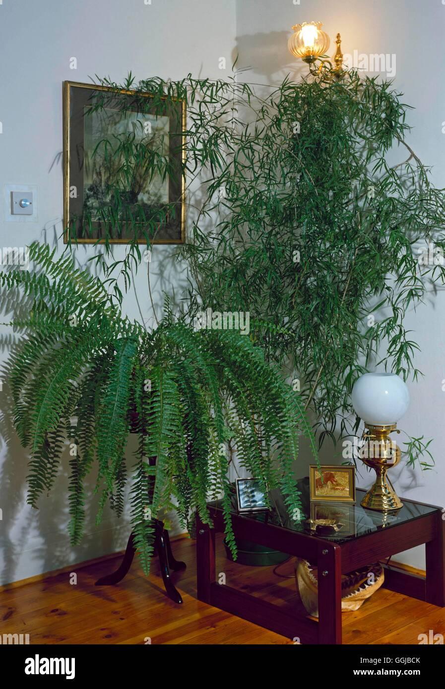Asparagus Falcatus Stock Photos & Asparagus Falcatus Stock Images ...