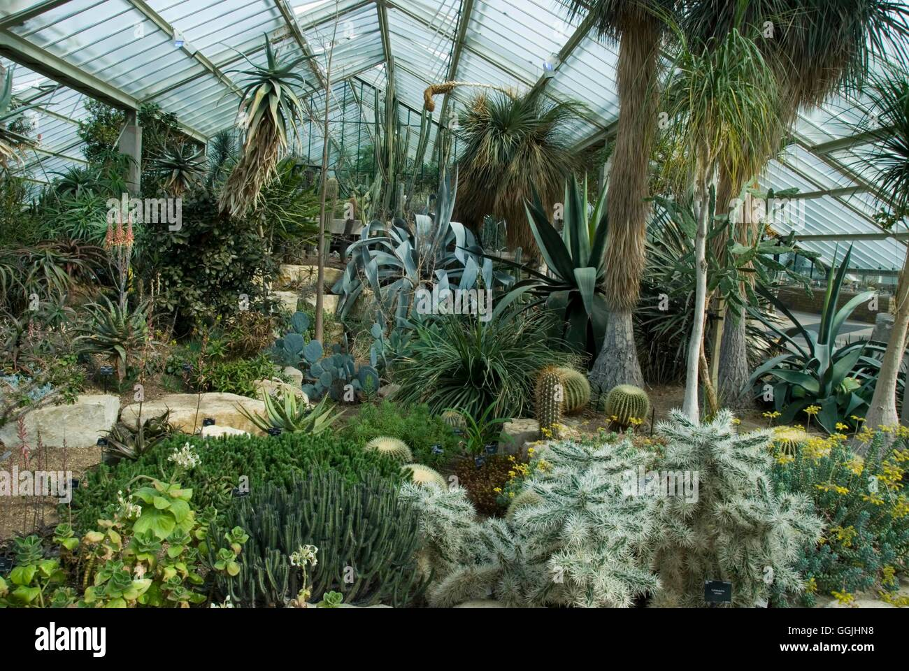 Royal Botanic Garden Kew    The Cacti And Succulent Section Of The Princess  Of Wales Glasshouse MIW253294 Compulsor
