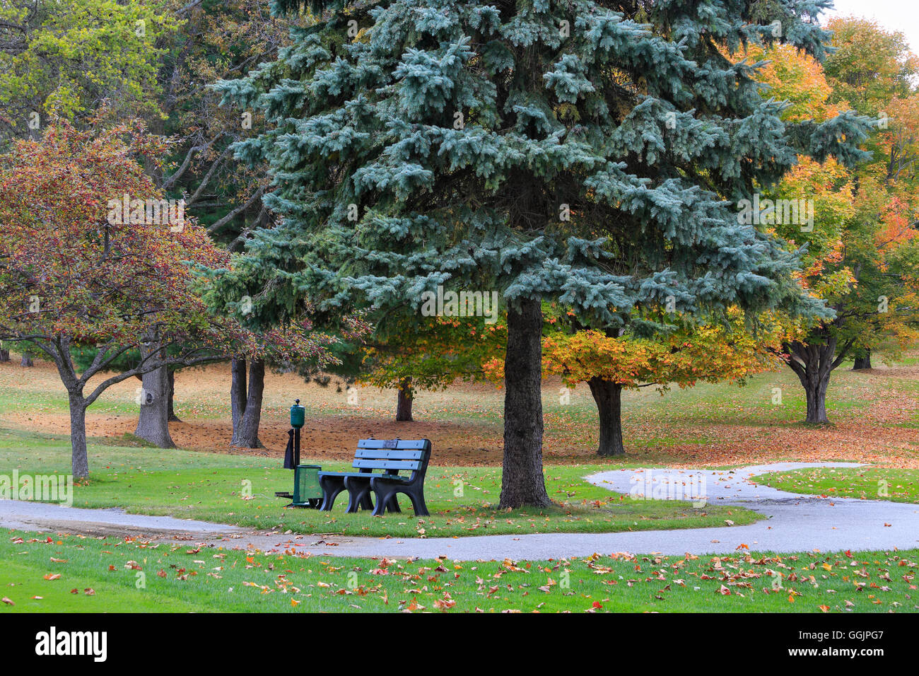 A bench and golf cart path in autumn near Big Sable Point, Ludington Michigan, Lower Peninsula, USA - Stock Image