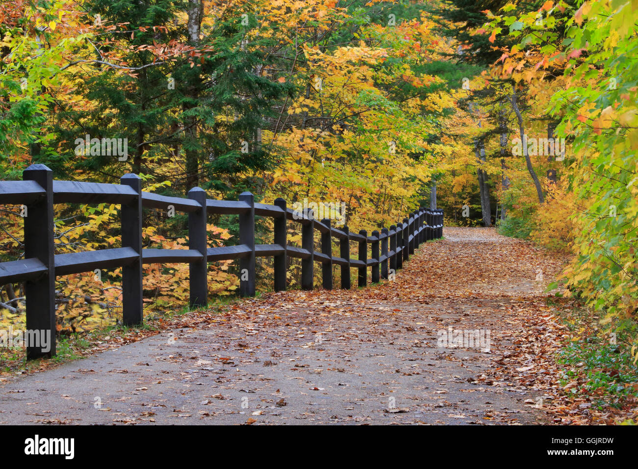 A fence and colorful tree lined path in autumn leading down to the falls, Tahquamenon Falls Michigan, Upper Peninsula, - Stock Image
