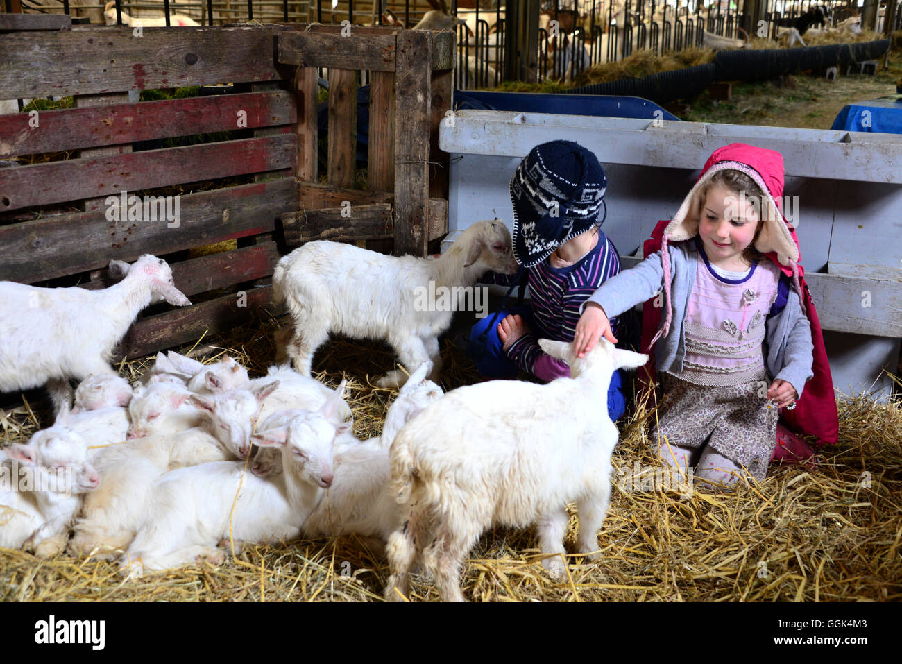 Children at a goat farm in Clare, West coast, Ireland - Stock Image