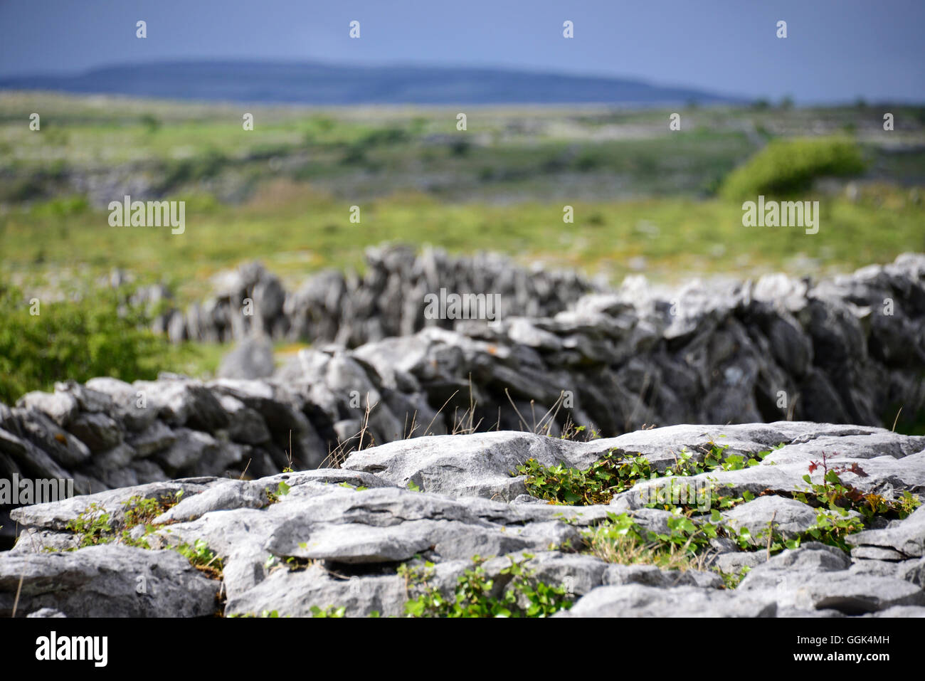 In the Burren, Clare, West coast, Ireland Stock Photo
