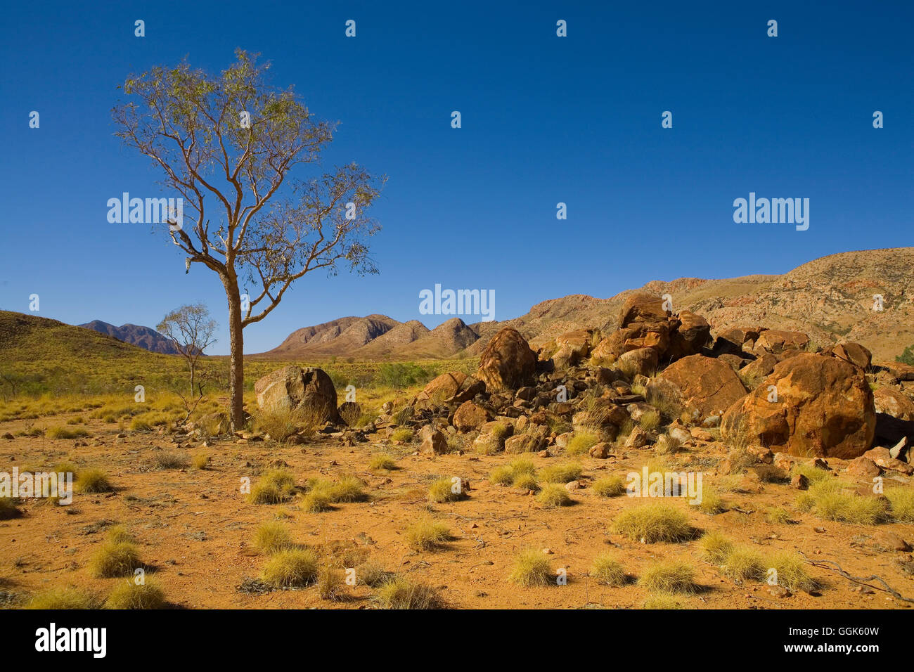 Tree and red rocks on an Outback plateau with hills in the background, East MacDonnell Ranges National Park, Northern - Stock Image
