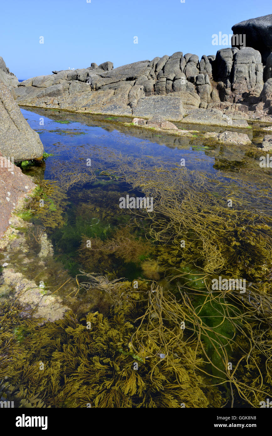 Rock Pool - St Mary's, Isles of Scilly - Stock Image