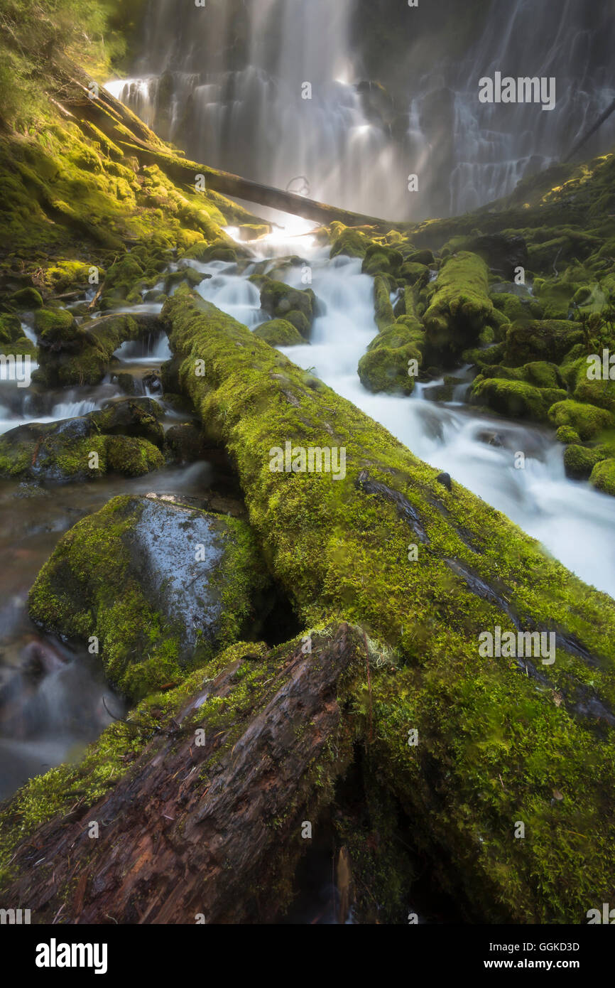 Willamette National Forest, Three Sisters Wilderness, Oregon, USA Stock Photo