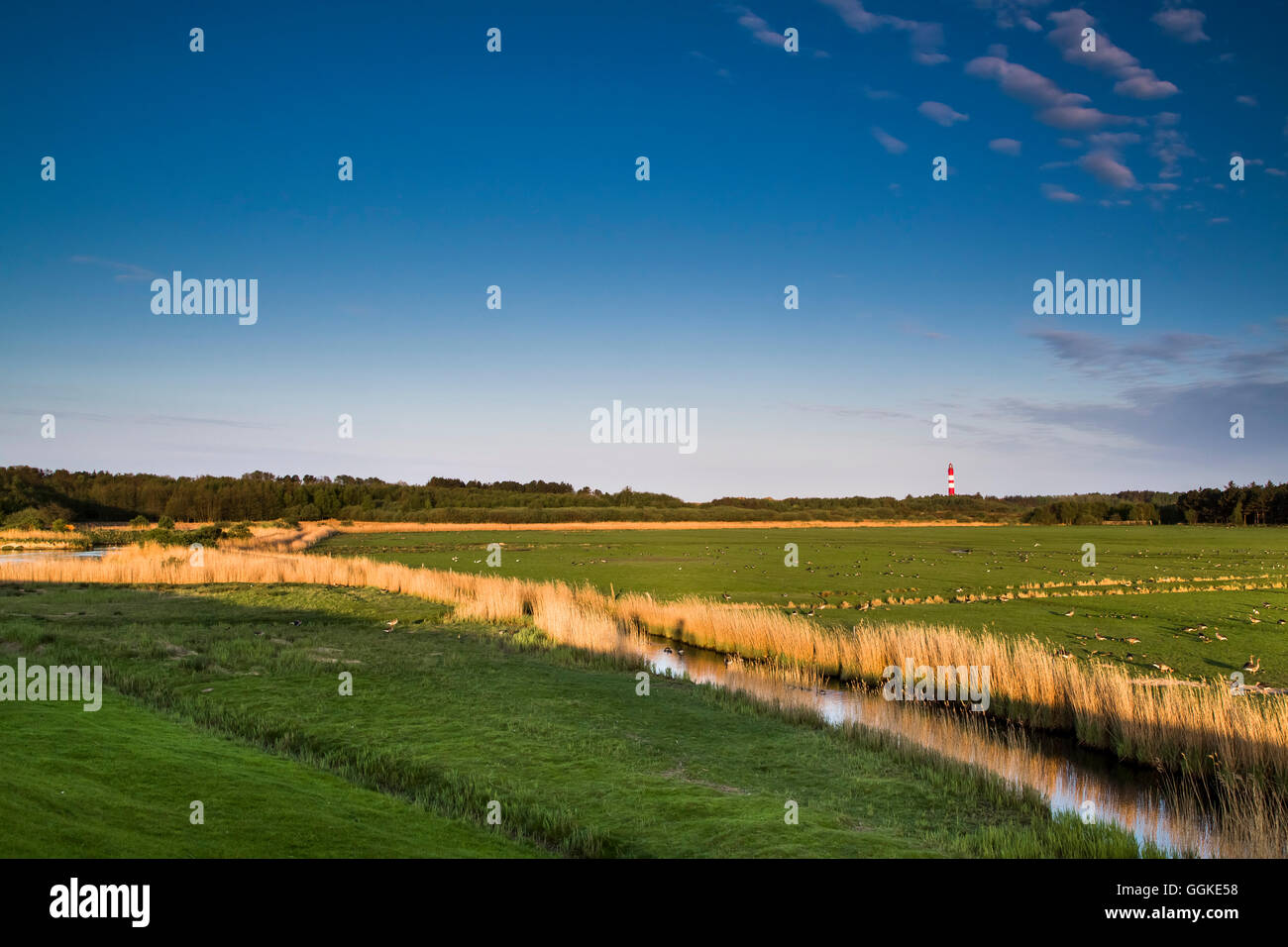 Salt marsh and lighthouse, Amrum Island, North Frisian Islands, Schleswig-Holstein, Germany - Stock Image