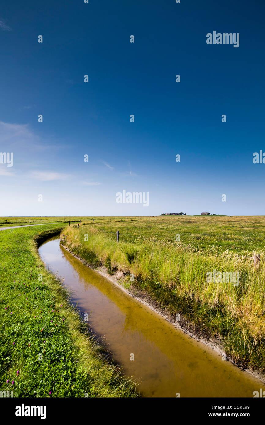 Salt marsh, Hallig Langeness, North Frisian Islands, Schleswig-Holstein, Germany - Stock Image